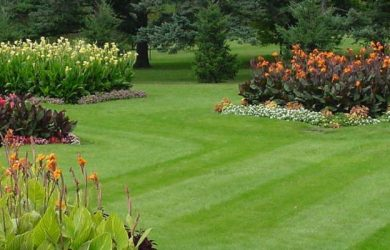 Putting Together A Beautiful Lawn Design