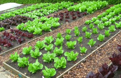 Planning Your Organic Backyard Garden