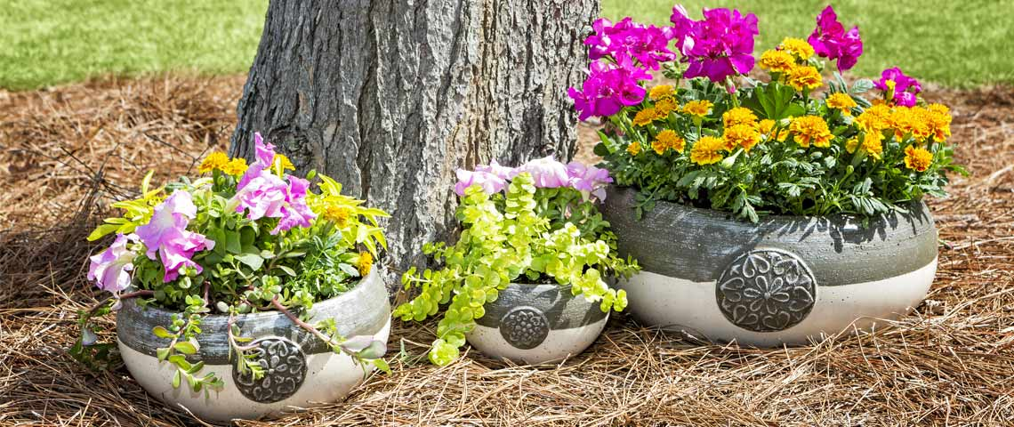 flower-containers-header